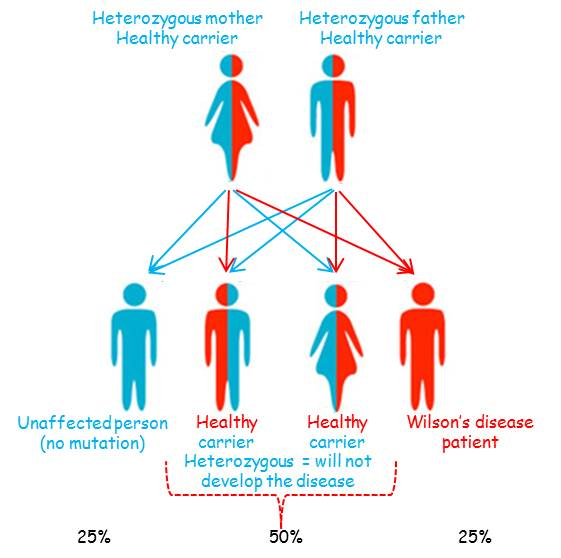 family diagnosis